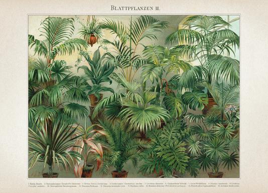 Blattpflanzen 3 - Meyers Canvas print