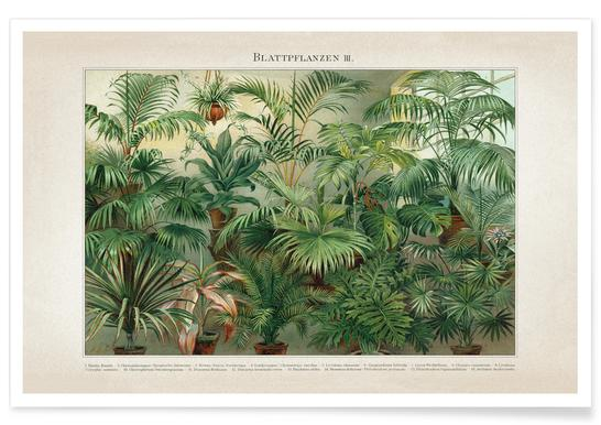 Blattpflanzen 3 - Meyers Poster