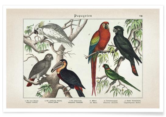 Papageien 8 - Schubert Poster