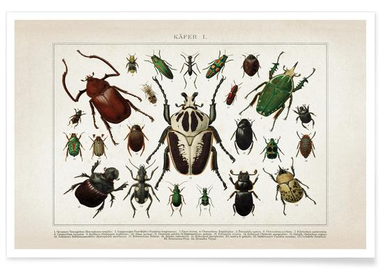 Käfer 1 - Brockhaus Poster