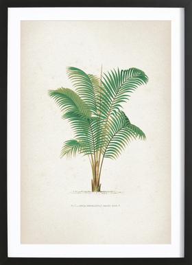 Les Palmiers 1 - Kerchove affiche sous cadre en bois