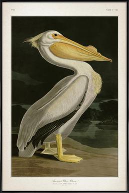 American White Pelican - Audubon affiche encadrée