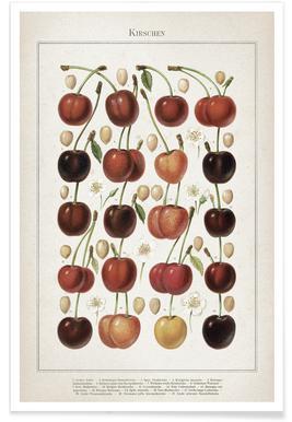 Kirschen - Meyers Affiche