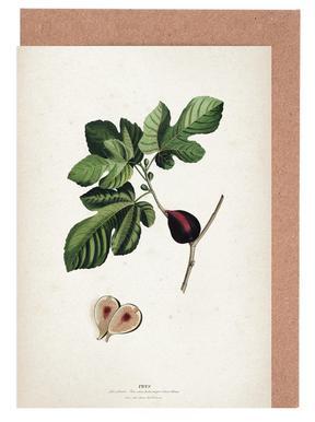 Ficus - Ehret Greeting Card Set