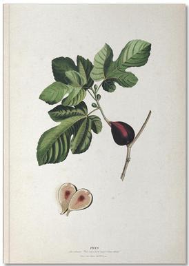 Ficus - Ehret Carnet de note