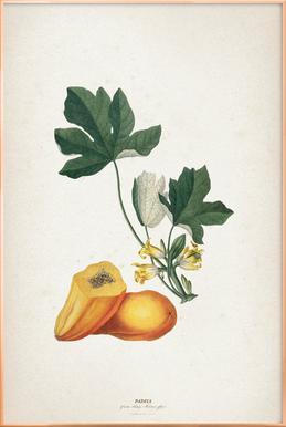 Papaya - Ehret affiche sous cadre en aluminium