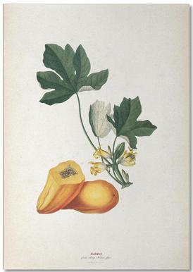 Papaya - Ehret Notepad