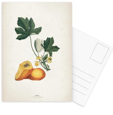 Papaya - Ehret Postcard Set