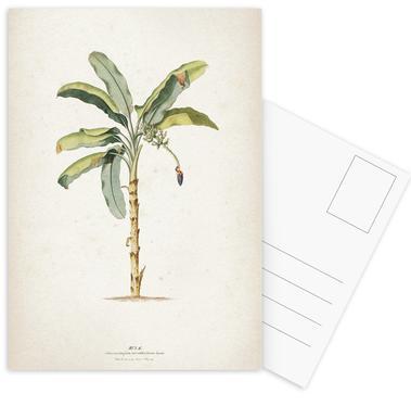 Musae Maculato - Ehret Postcard Set