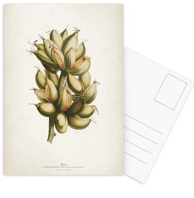 Musae Priores - Ehret cartes postales
