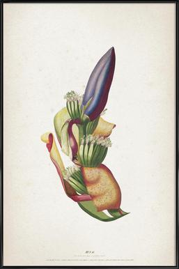 Musae Spadix - Ehret Framed Poster