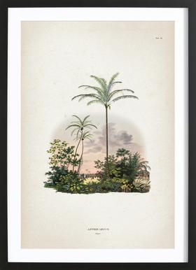 Astrocaryum Vulgare - Martius Framed Print