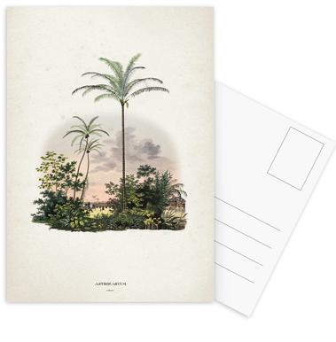 Astrocaryum Vulgare - Martius Postcard Set