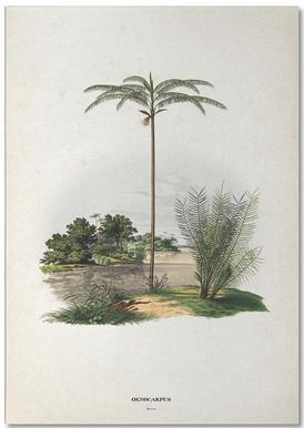Oenocarpus Bataua - Martius bloc-notes
