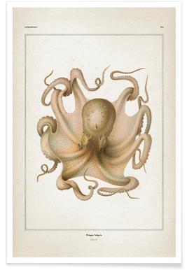 Octopus Vulgaris - Vérany affiche
