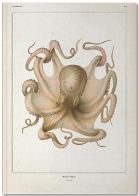 Octopus Vulgaris - Vérany Notizbuch