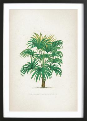 Les Palmiers 25 - Kerchove affiche sous cadre en bois
