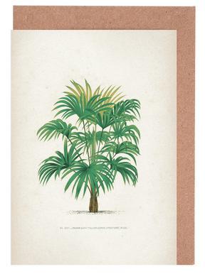 palmier 9.99