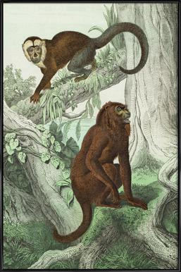 Affen 3 - Schubert Framed Poster