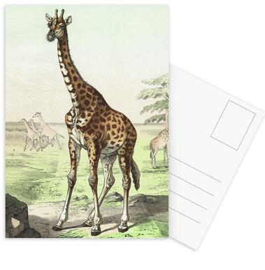 Wiederkäuer 22 - Schubert cartes postales
