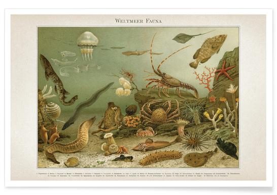 Weltmeer Fauna - Meyers Poster