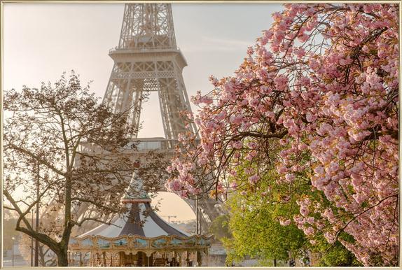 Cherry Blossom -Poster im Alurahmen
