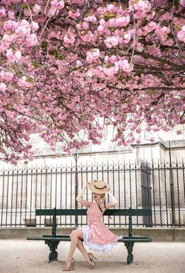 Lady at the Cherry Blossom Aluminium Print