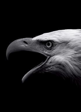 Buy Eagle Canvas Prints and Art Online   JUNIQE