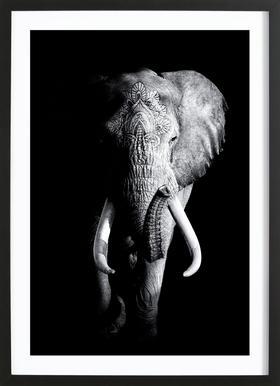 Dark Elephant Affiche sous cadre en bois