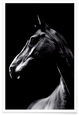 Dark Horse affiche
