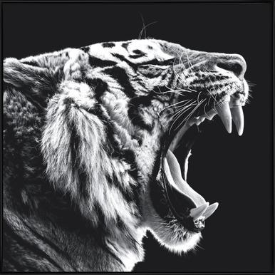 Roaring Tiger Poster im Kunststoffrahmen