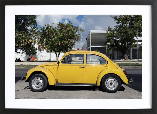 Mexican Beetle 13 Framed Print