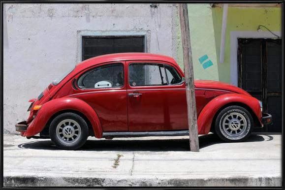 Mexican Beetle 15 Framed Poster