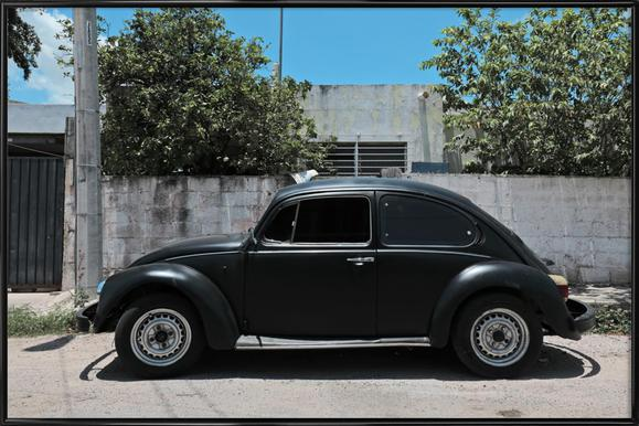 Mexican Beetle 16 Framed Poster