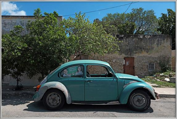 Mexican Beetle 22 as Poster in Standard Frame | JUNIQE