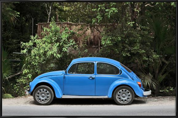 Mexican Beetle 28 Framed Poster