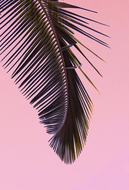 Tropicana Pink by @BineArnold Acrylic Print