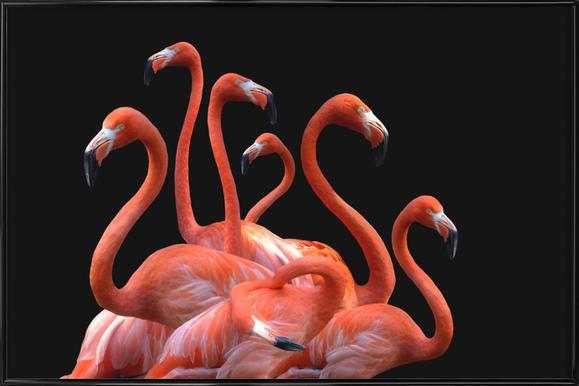 Flamingo Band by @nodar affiche encadrée