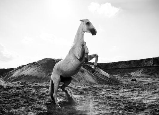 Majestic Stallion by @Werema Canvas Print