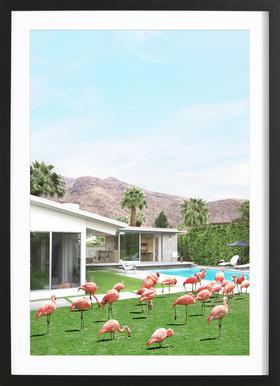 Flamingos in Palm Springs Poster im Holzrahmen