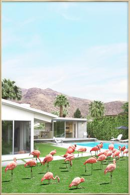 Flamingos in Palm Springs -Poster im Alurahmen