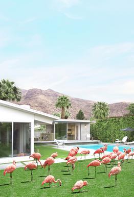 Flamingos in Palm Springs Alu-Dibond Druck
