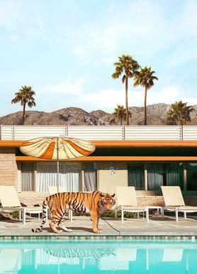 Pool Party Tiger Leinwandbild