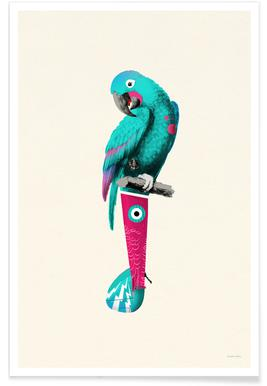 Turquoise Parrot Poster