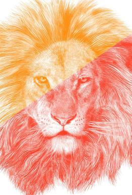 Wild III acrylglas print