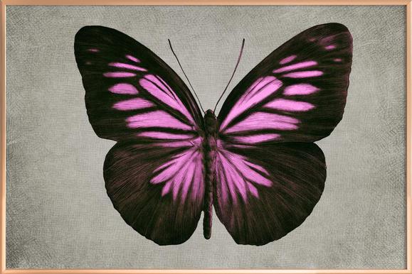 Papillon (pink) Poster in Aluminium Frame