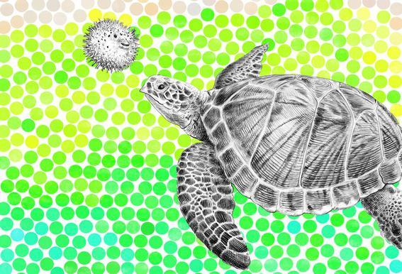 Turtle and Pufferfish acrylglas print