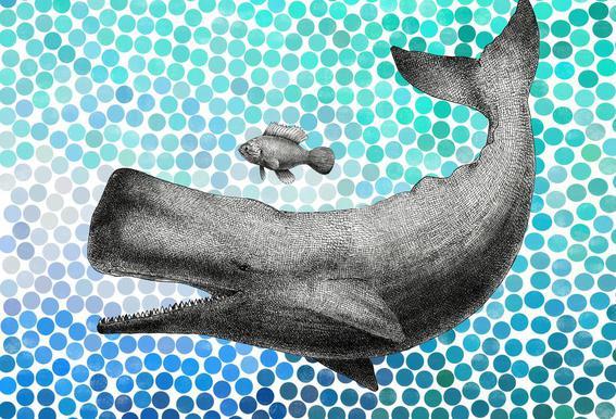 Whale and Fish Acrylglasbild