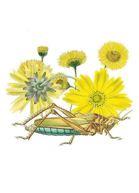 Yellow Flowers and Grasshopper Canvas print