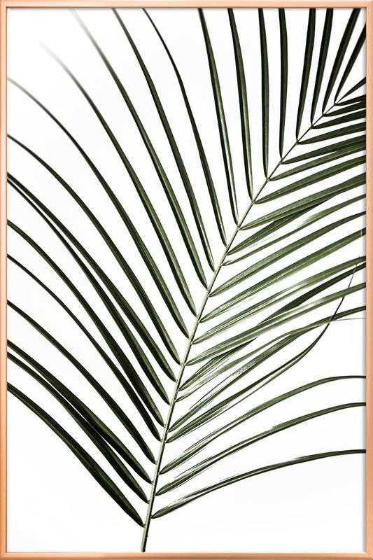 Palm Leaves 8 Poster in Aluminium Frame